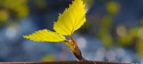 leaf-make-change